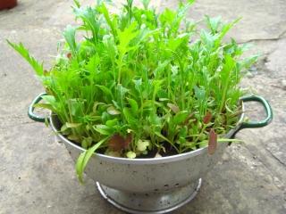 salad-colander