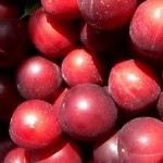 Wild plum/cherry plum jam recipe